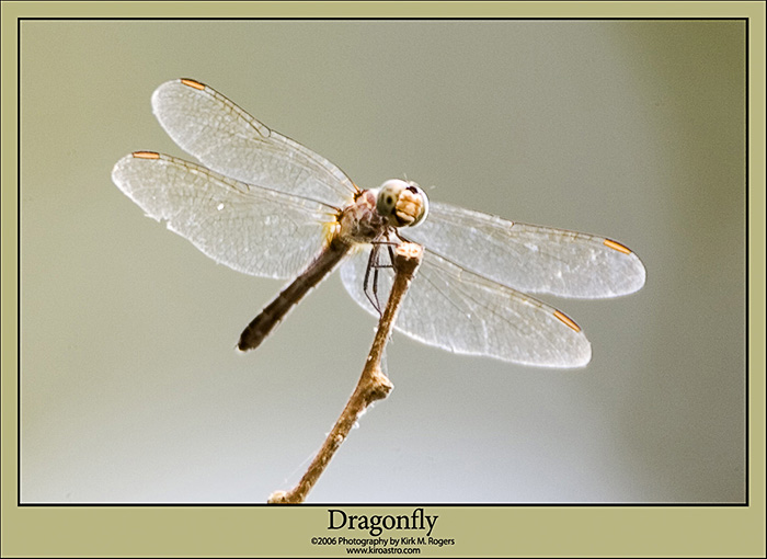 Dragonfly at the Swamp