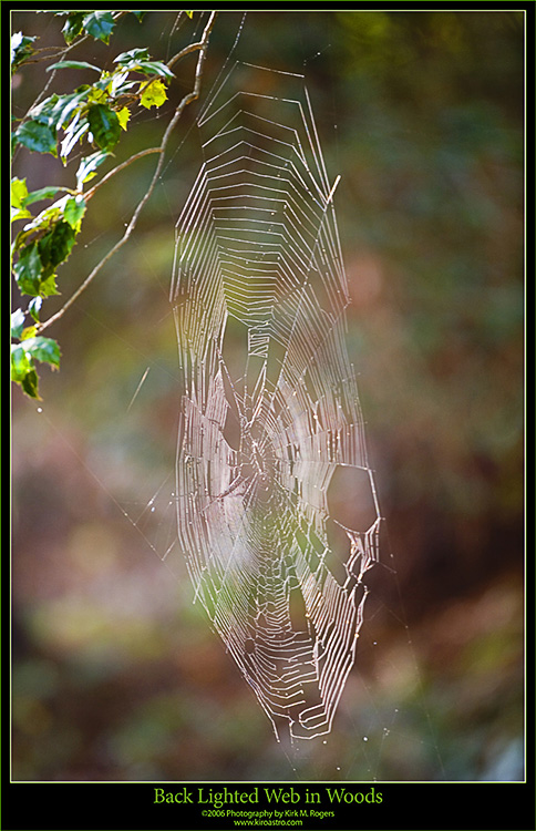 One of the Spider Webs in the Woods